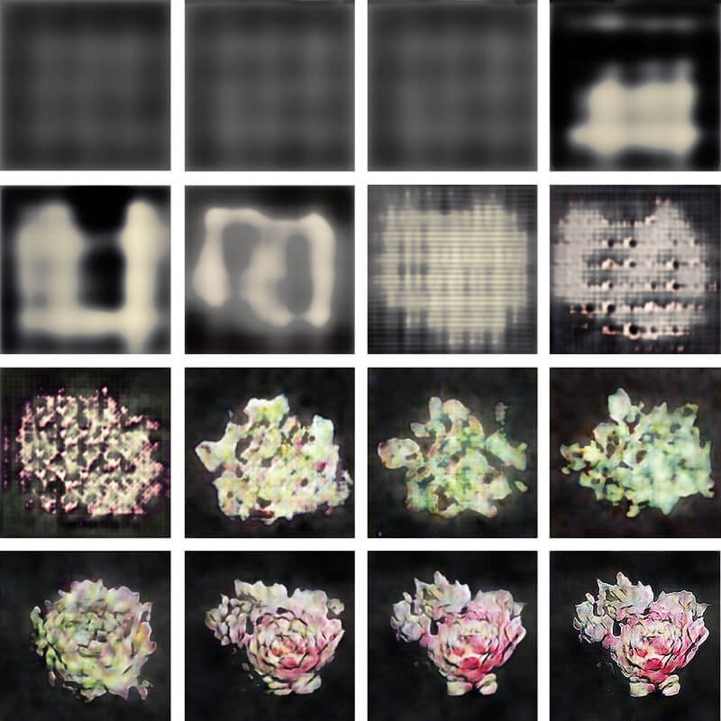 AI-generated Sempervivum images, with Brennan Goddard and Jimmy Herdberg